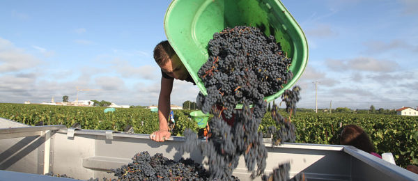 Experience Bordeaux in Harvest time on the Bordeaux Harvest Tour