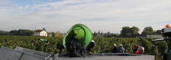 The 2016 October Bordeaux Grand Cru Harvest Tour
