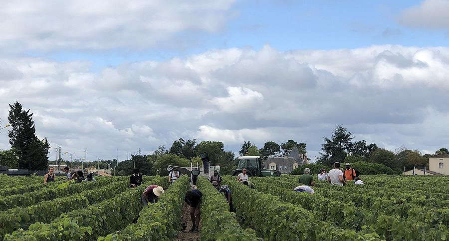 The Bordeaux Grand Cru Harvest Tour is an unforgettable experience