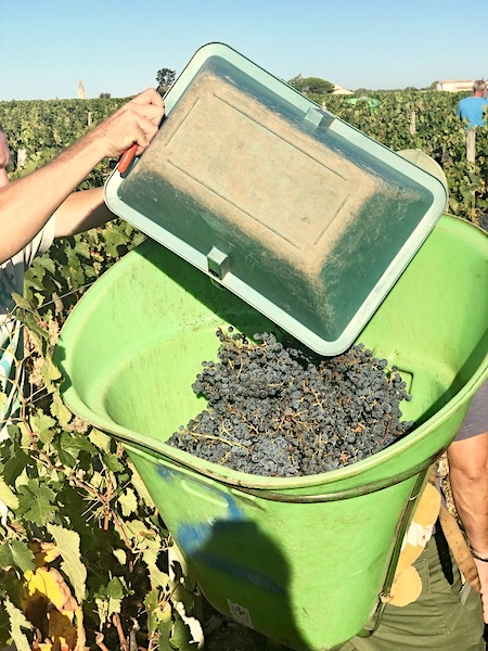 From grape to bottle on the 2019 Bordeaux Harvest Tour I